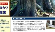 i_toyokawa
